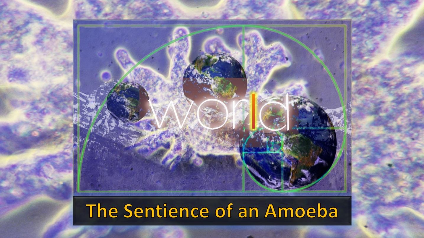 Videoz-Coversz-animotoz-images - sentience-amoeba-cover.jpg